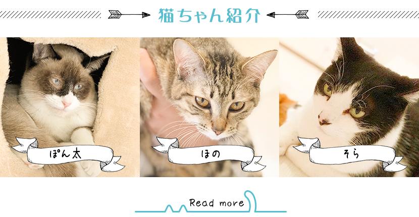 猫ちゃん紹介